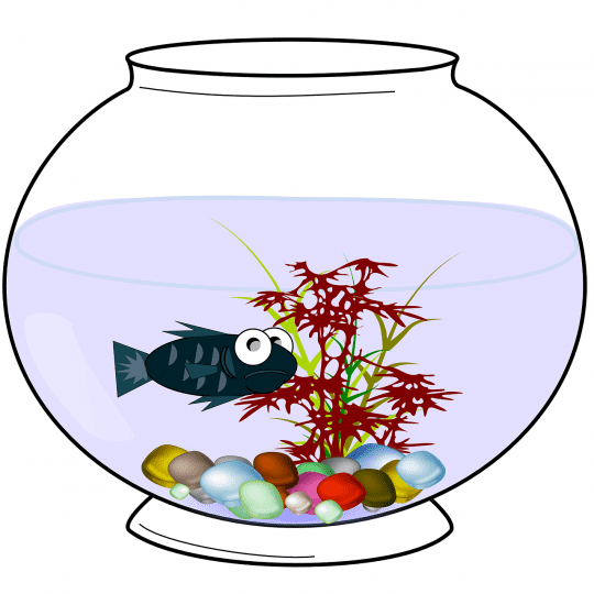 Stressed fish in bowl